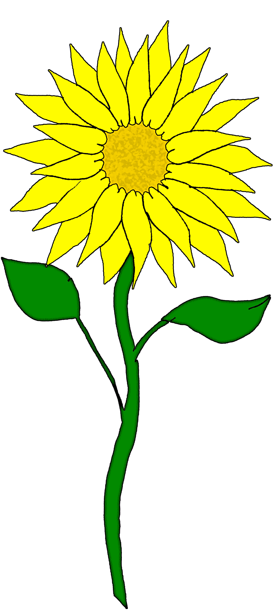 Sunflower transparent png images amp cliparts  About 1200